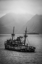 Shipwreck now a bird haven called Capitán Leonidas.