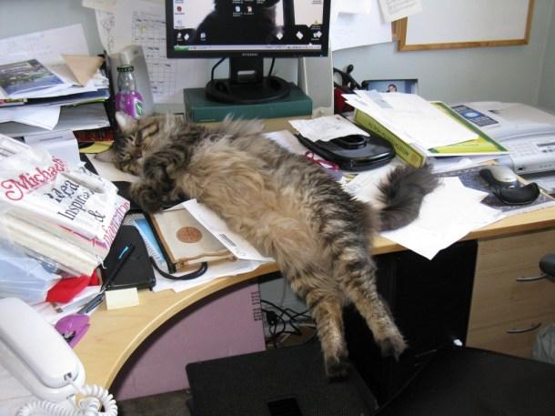 kitty-desk
