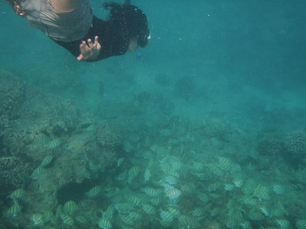 me-snorkel