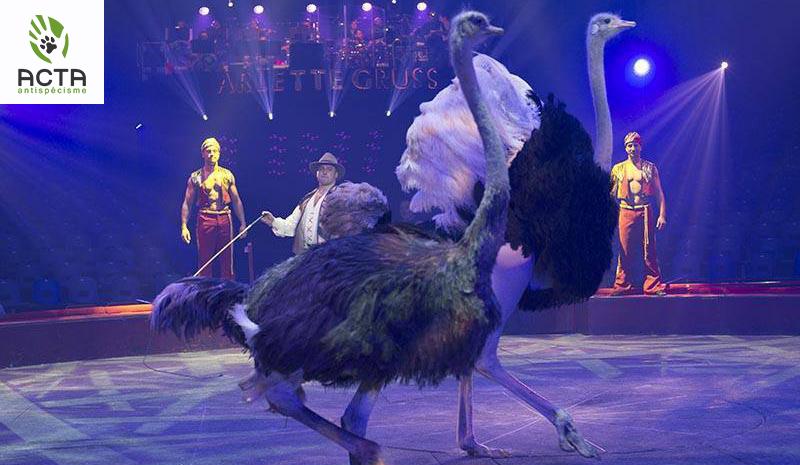 NON aux cirques avec animaux