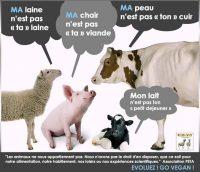 animaux_0003