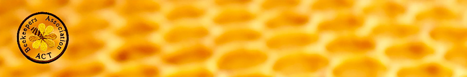 cropped-header-1.png