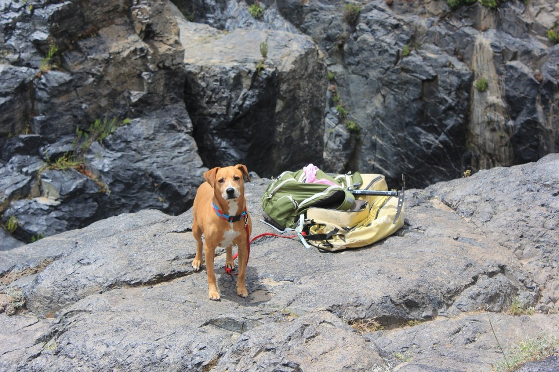 Dog Hiking.jpg
