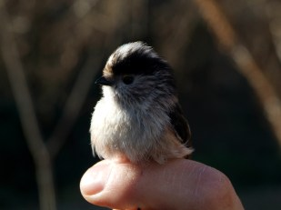 Día Mundial de las Aves 3