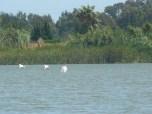 Birding en la Albufera
