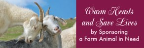 Warm Hearts and Save Lives by Sponsoring a Farm Animal in Need