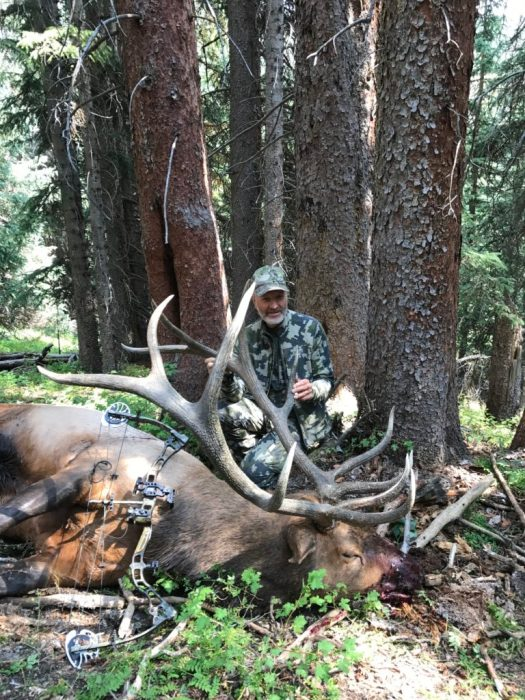 Archery elk hunting