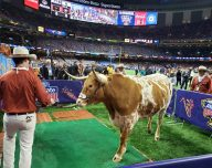 Bevo at 2019 Sugar Bowl