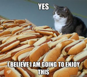 Cat and hot dogs - good feelings don't last