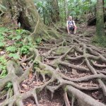 Active Caribbean Travel - St. Kitts & Nevis Adventures... Hiking Mount Liamuiga