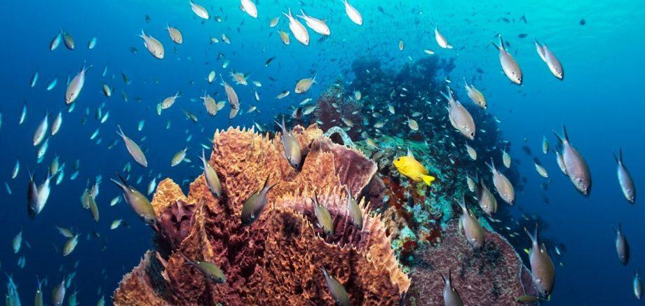 saint lucia snorkeling active caribbean travel