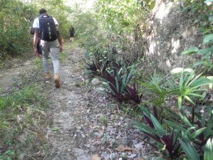Active Caribbean Travel hikes Jamaica's Cockpit Country - Burnt Hill Nature Trail