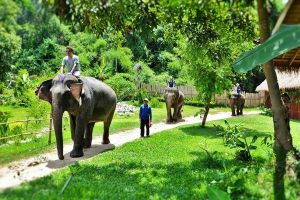 1 Day Mountain Biking and Elephant Riding Adventure