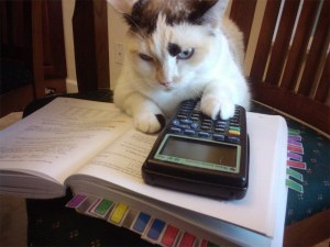 Calculator Cat