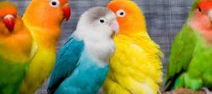Diverse Birds