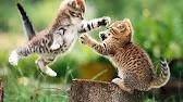 kitten-fight