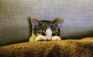 http://maxpixel.freegreatpicture.com/Kitten-Pet-Couch-Scaredy-Cat-Animal-Paws-2558459
