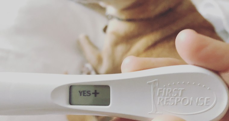 I'm pregnant again after a miscarriage and things are different this time