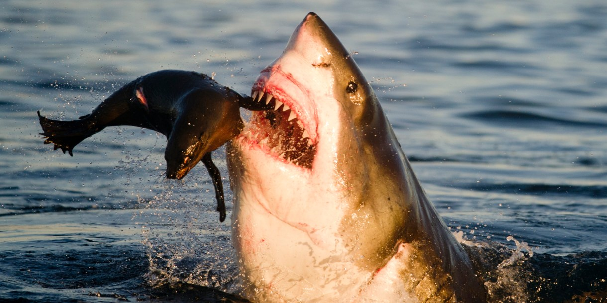 Beware of the Shark-Infested Waters of Northern California's