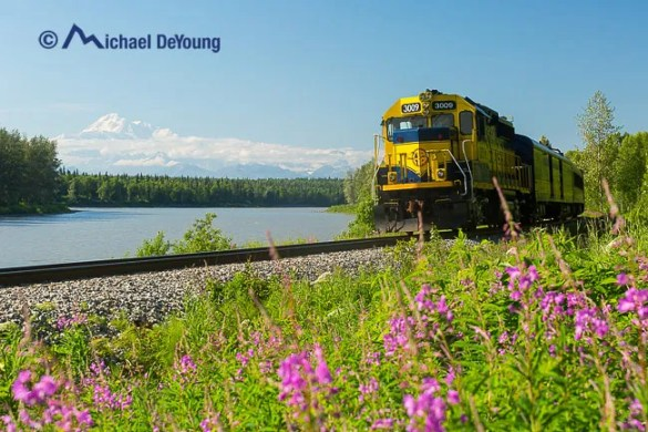 Alaska Railroad, Hurricane Gulch Train along the Susitna River with fireweed and views of Denali