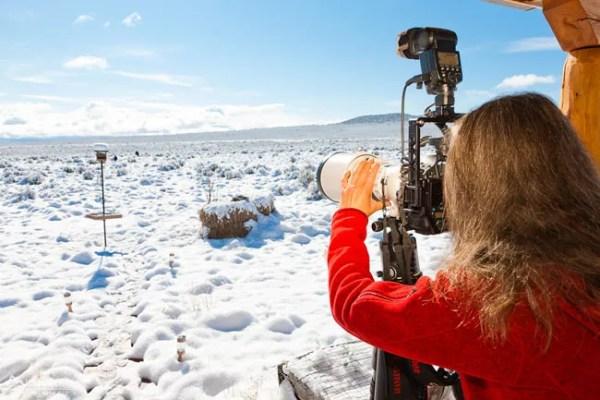 Photographing mountain bluebirds image