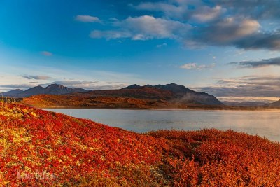 Image of fall colored tundra © Michael DeYoung