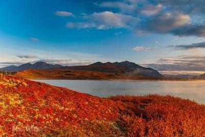Image of fall colored tundra