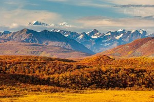 Image of Alaska Range peaks with fall color tundra in the foreground