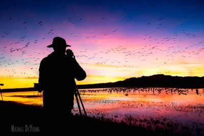 Photographer taking pictures of sandhill cranes landing for the night