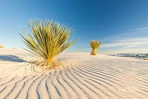 View the yucca and texture in the sand - White Sands National Park