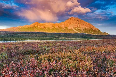 Fall colors along the Denali Highway tundra