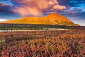 Tundra fall colors along the upper Susitna River from our Denali Highway Alaska photo tour. © Michael DeYoung