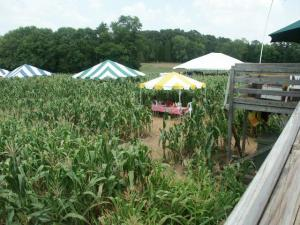 The Amazing Maize Maze in Huntersville NC