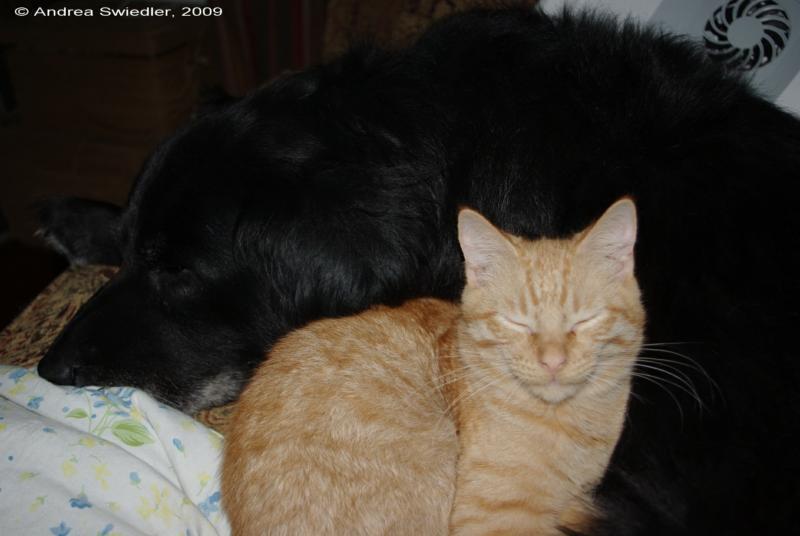Duncan & Garfield