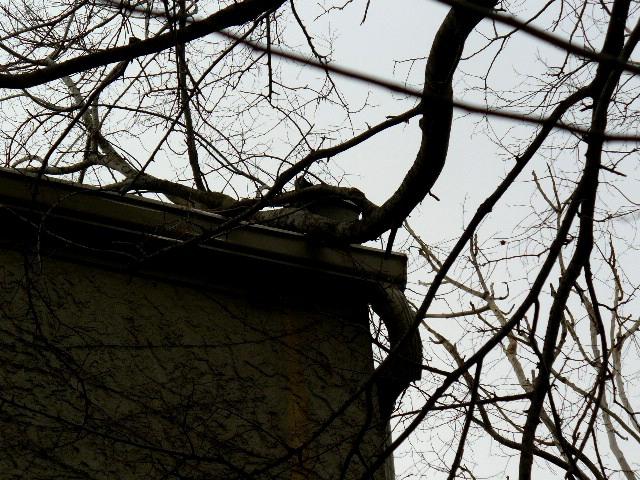 Branch Encroachment