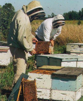 Bee keeping Waukesha county real estate and the lake country real estate