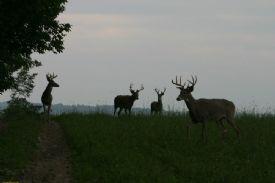 Hunting territory