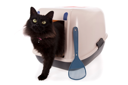 Kitty coming out of litter box