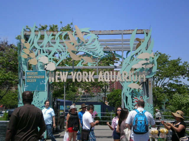brooklyn aquarium coney island, real estate agents in brooklyn