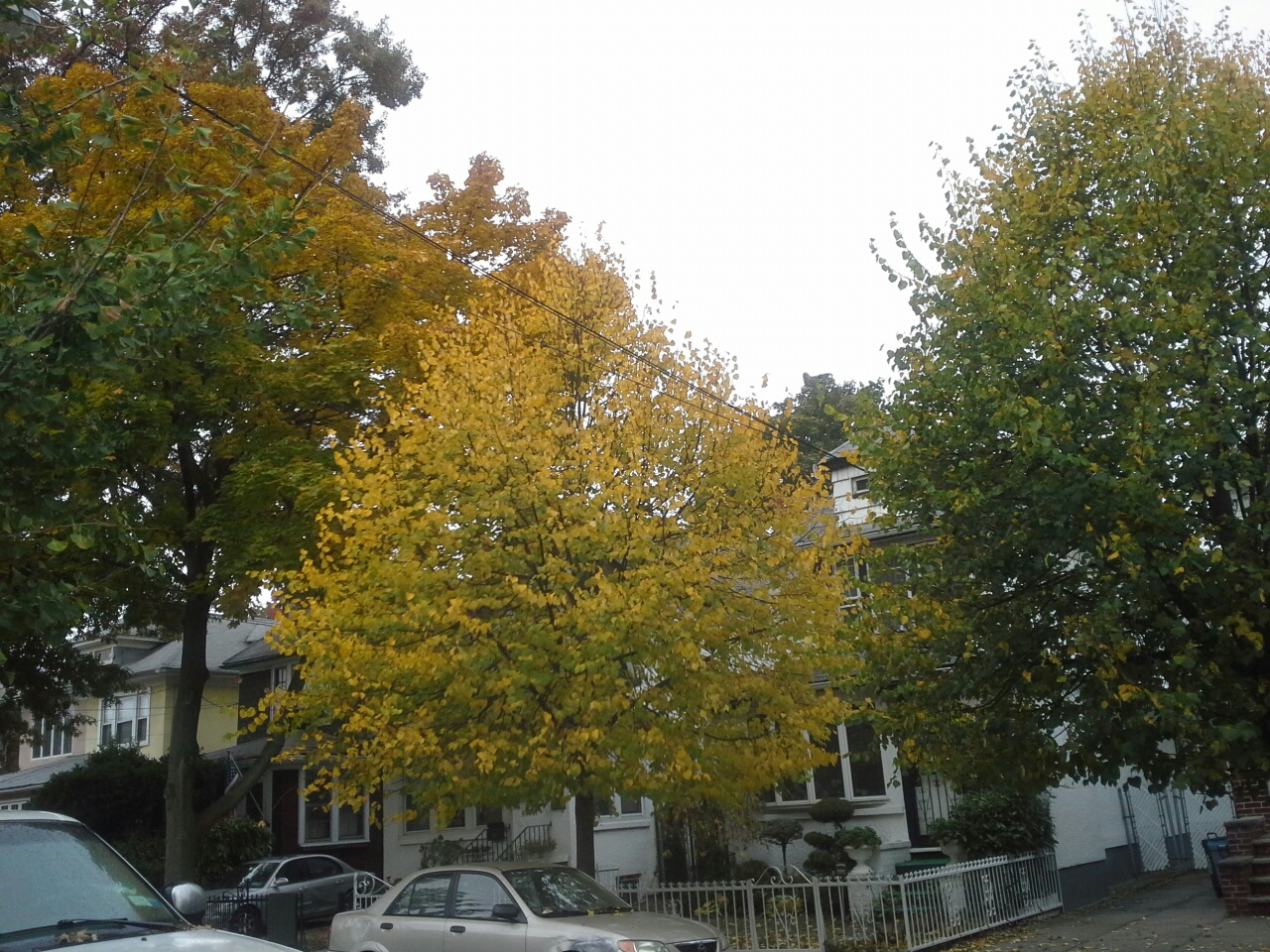 Autumn in East Flatbush Brooklyn New York