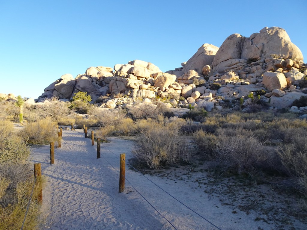 Barker Dam Trail – Things to do Joshua Tree NP – Best Hikes