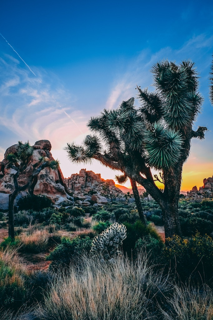 Top 17 Things To Do Joshua Tree National Park – Best of Joshua Tree NP