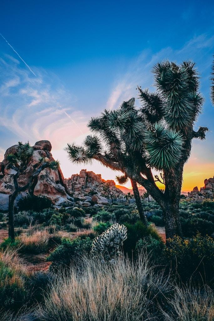 Top 17 Things To Do Joshua Tree National Park – Best of Joshua Tree NP