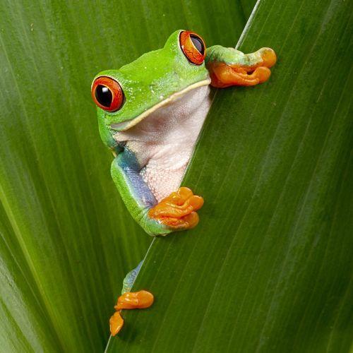 Wyjazdy do Kostaryki