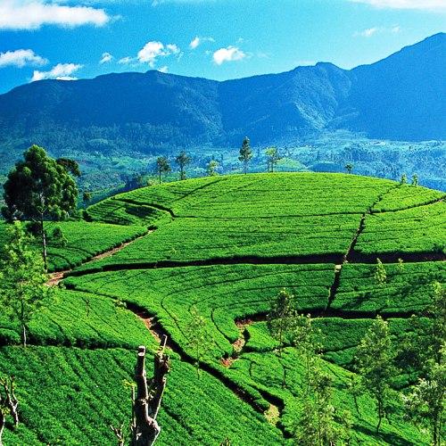 Wyjazdy na Sri Lankę