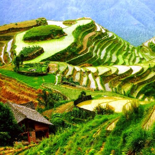 Wyjazdy do Wietnamu