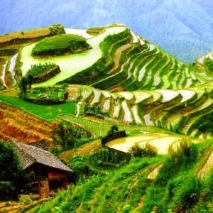WIetnam tarasy ryżowe
