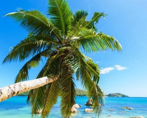 Wyjazdy na Dominikanę