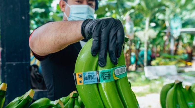 Un retailer canadiense se compromete a ofrecer exclusivamente bananas de Comercio Justo