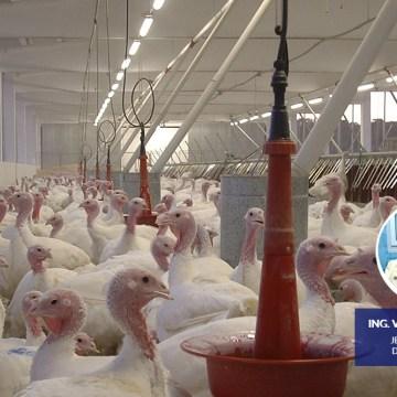 Produss realizó destacado webinar: La nutrición y el manejo del alimento en pavos